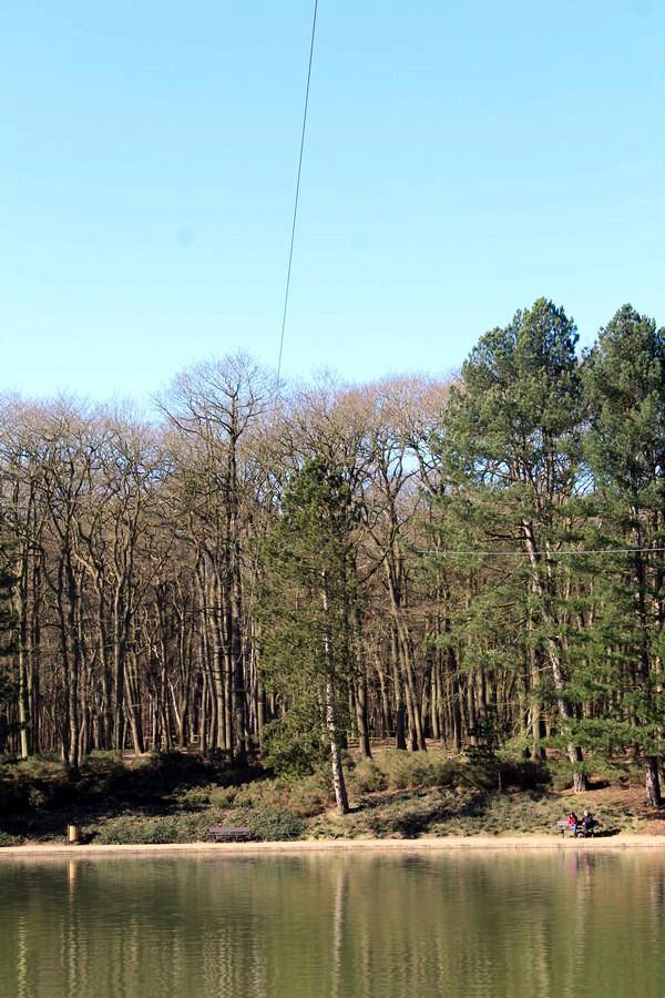 [fil ouvert] la forêt dans tous ses états - Page 18 030_co20