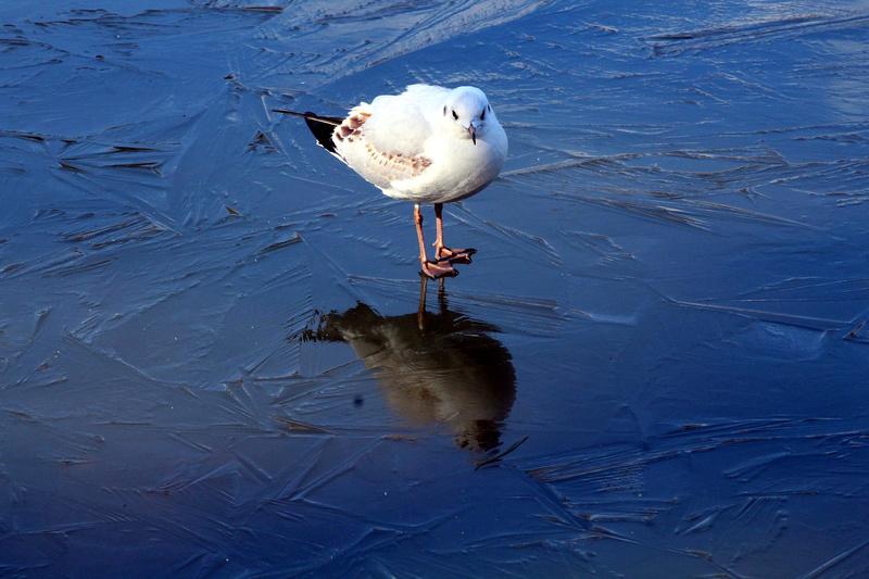 [Ouvert] FIL - Oiseaux. - Page 10 031_co20