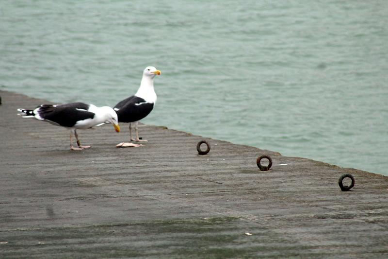 [Ouvert] FIL - Oiseaux. - Page 8 033_co20