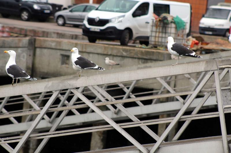 [Ouvert] FIL - Oiseaux. - Page 8 034_co26