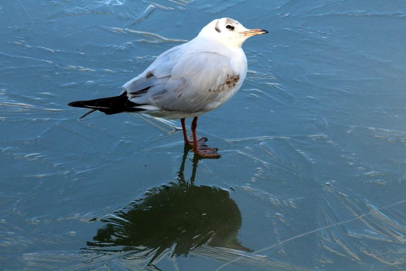 [Ouvert] FIL - Oiseaux. - Page 10 034_co28