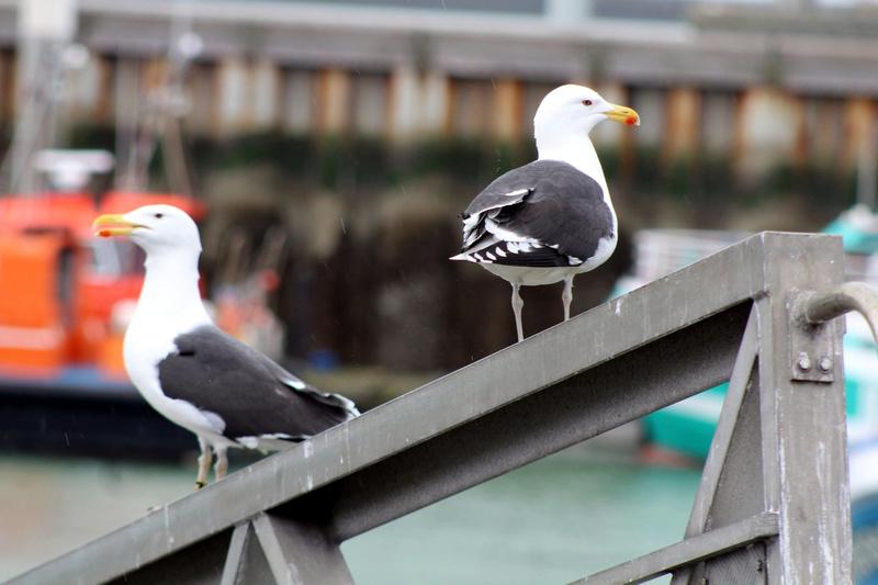 [Ouvert] FIL - Oiseaux. - Page 8 035_co18