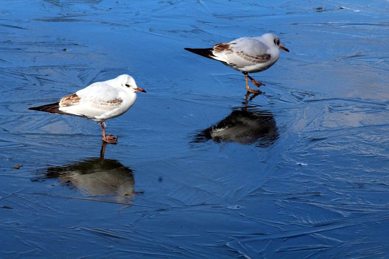 [Ouvert] FIL - Oiseaux. - Page 10 035_co20