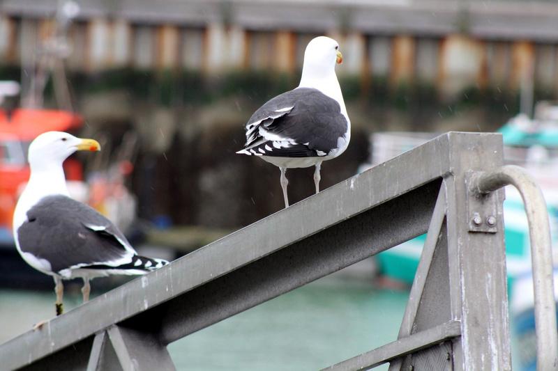 [Ouvert] FIL - Oiseaux. - Page 8 036_co19