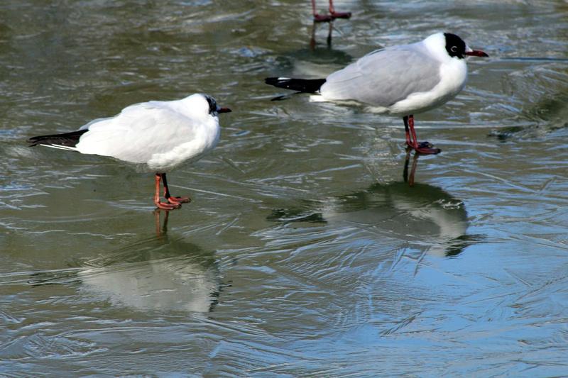 [Ouvert] FIL - Oiseaux. - Page 10 037_co28