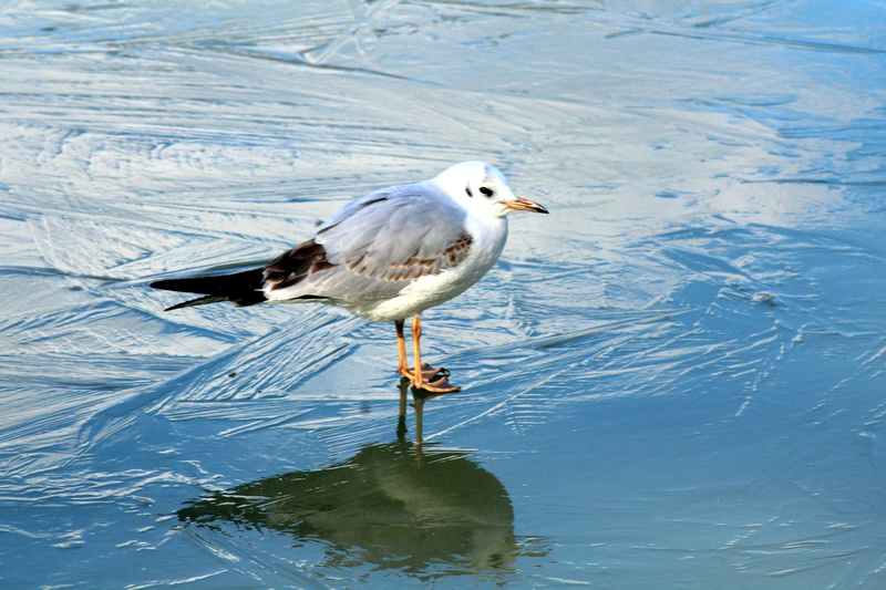 [Ouvert] FIL - Oiseaux. - Page 10 038_co20