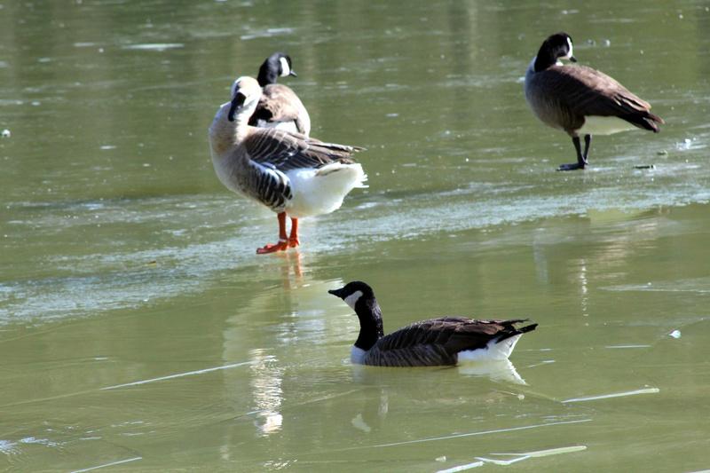 [Ouvert] FIL - Oiseaux. - Page 10 044_co23