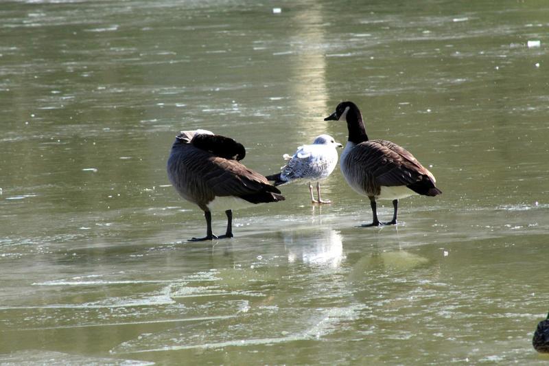 [Ouvert] FIL - Oiseaux. - Page 10 045_co24