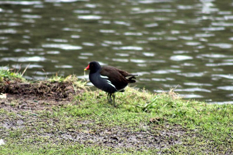 [Ouvert] FIL - Oiseaux. - Page 8 049_co24