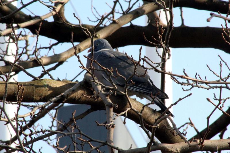 [Ouvert] FIL - Oiseaux. - Page 10 050_co24