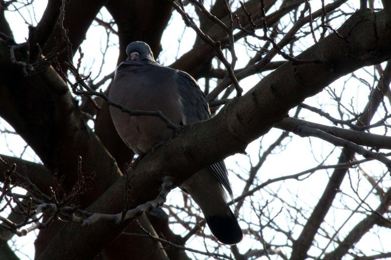 [Ouvert] FIL - Oiseaux. - Page 10 051_co29