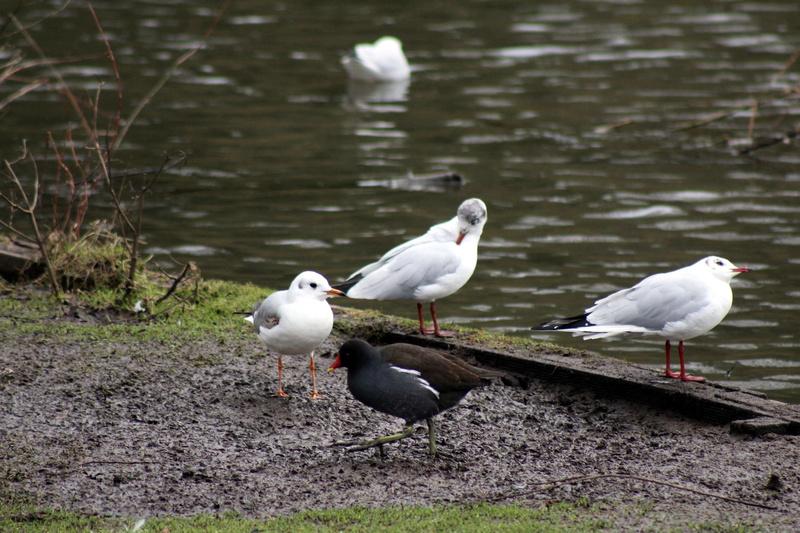 [Ouvert] FIL - Oiseaux. - Page 8 052_co29