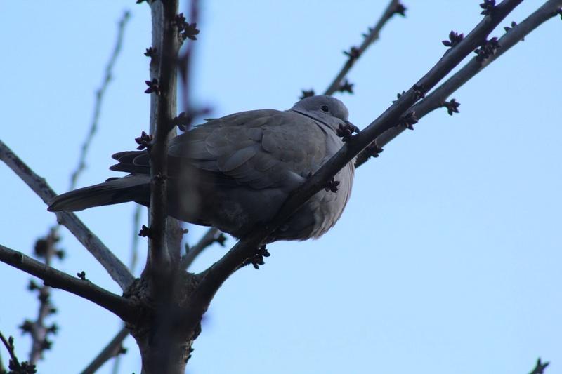 [Ouvert] FIL - Oiseaux. - Page 10 723