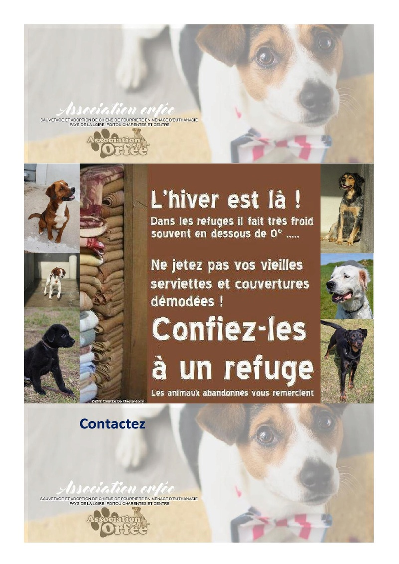 les affiches  Acfrog13