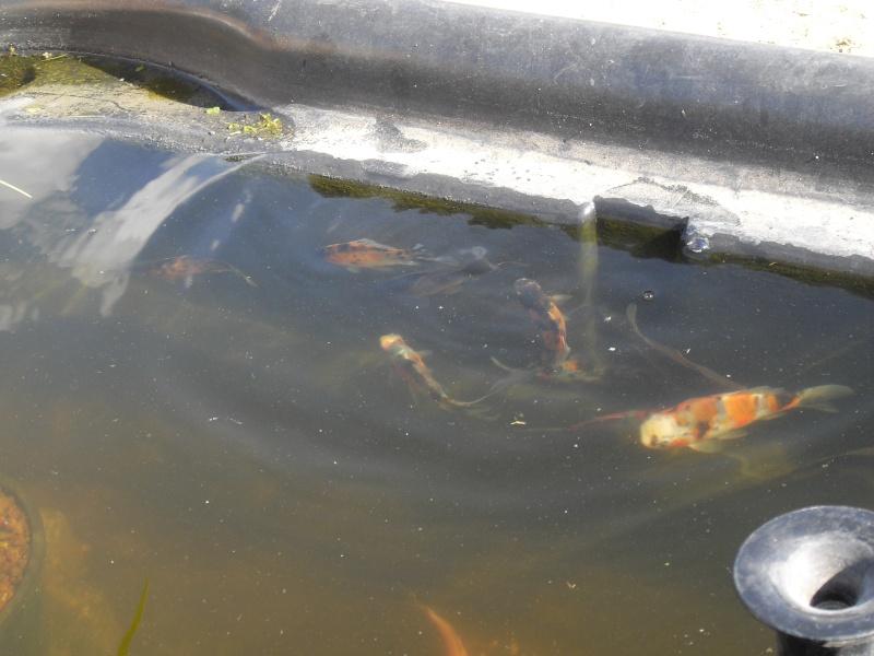 des conseils pour débutant Bassin26
