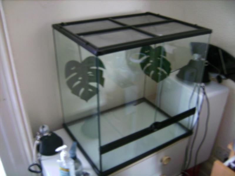 Exo Terra 60w x 45d x 60h vivarium with decor(bamboo, cork branch etc.) Bild2310