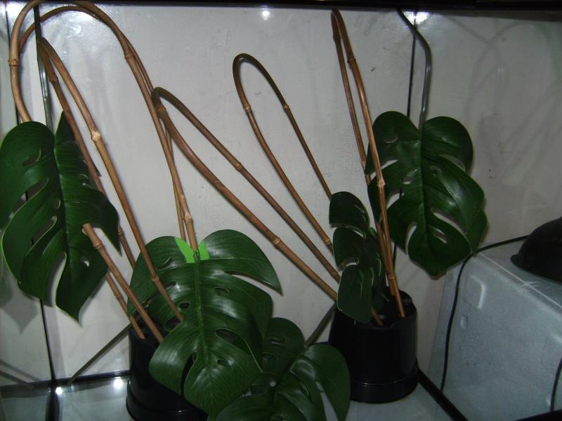Exo Terra 60w x 45d x 60h vivarium with decor(bamboo, cork branch etc.) Bild2312