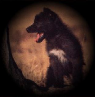 DarkBlades Wolf Bio Gw310h11