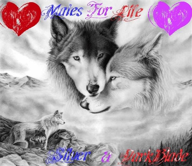 DarkBlades Wolf Bio Gw640h10