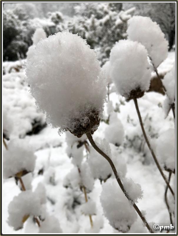 Il neige en Provence ! (avec quelques fleurs) 2018-082