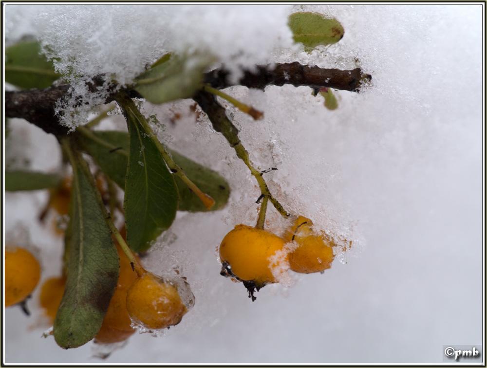 Il neige en Provence ! (avec quelques fleurs) 2018-087