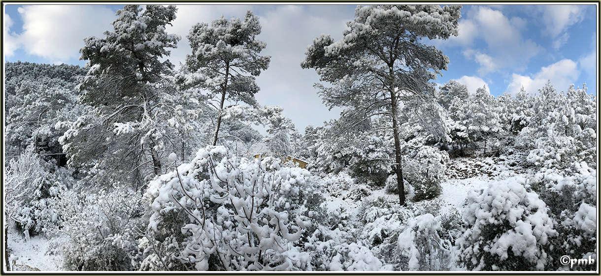 Il neige en Provence ! (avec quelques fleurs) 2018-096