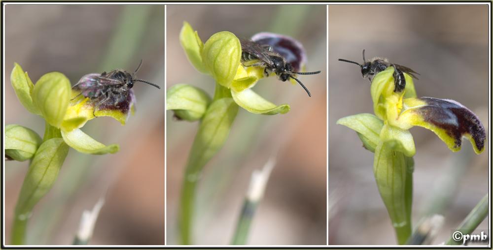 Histoires de pollinisateurs 2018-136