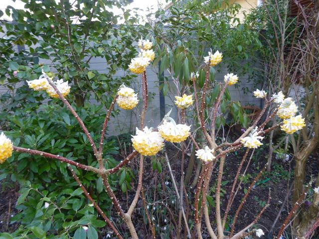 couleurs d'hiver au jardin  02-02-18