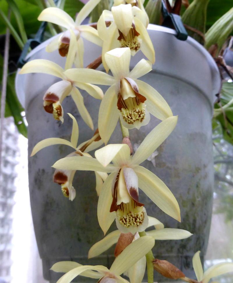 orchidées - floraisons du moment 2018 03-02-12