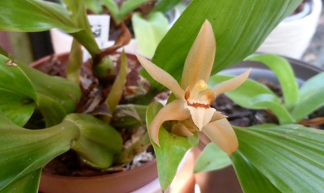 orchidées - floraisons du moment 2018 24-02-14