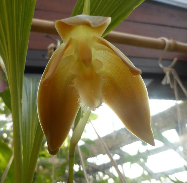 orchidées - floraisons du moment 2018 24-02-16