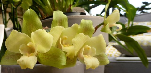 orchidées - floraisons du moment 2018 - Page 2 26-03-14