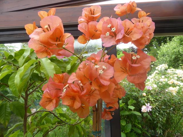 """Déficoncours """"Jardins sous verre"""" - Participations 28-05-10"""
