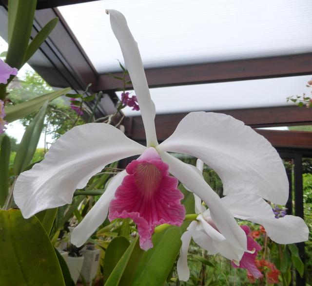orchidées - floraisons du moment 2018 - Page 3 29-05-12
