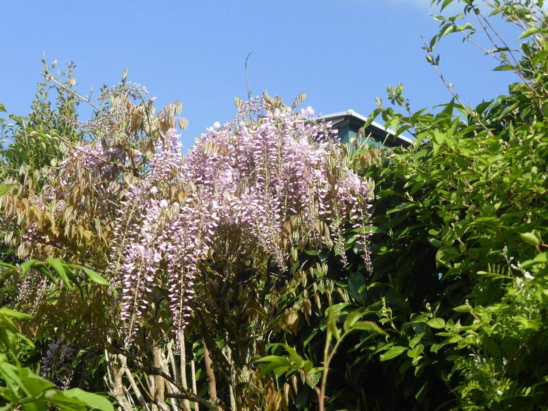 les jardins sont beaux en mai ! Jardin11