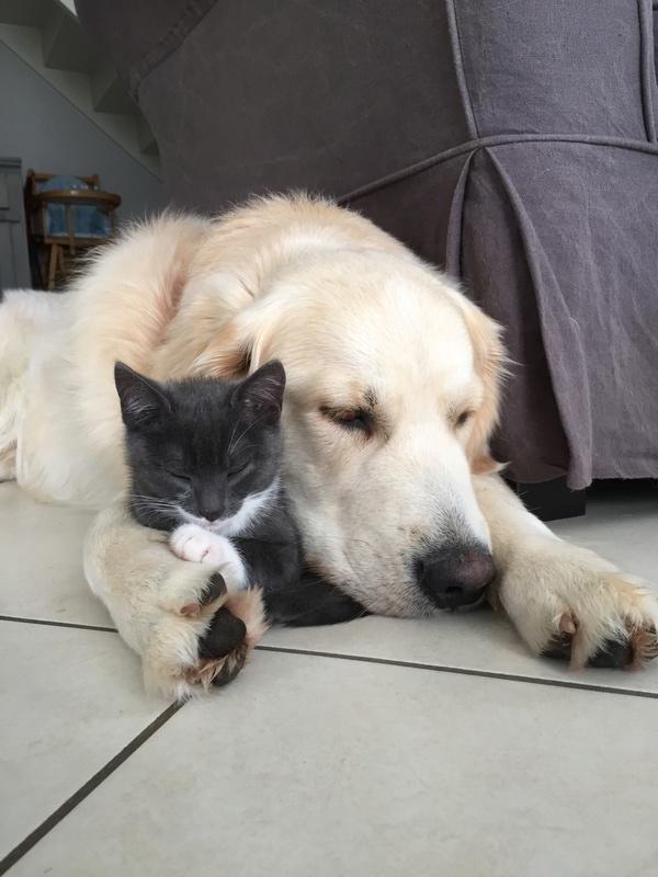 Comme chien et chat  Img_2511