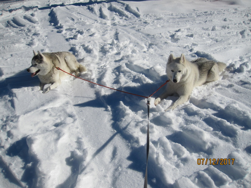 Saskia, Jiro, et leurs copains - Page 5 1024