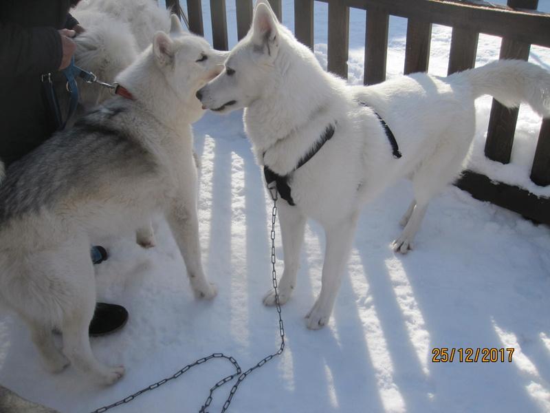 Saskia, Jiro, et leurs copains - Page 2 1034