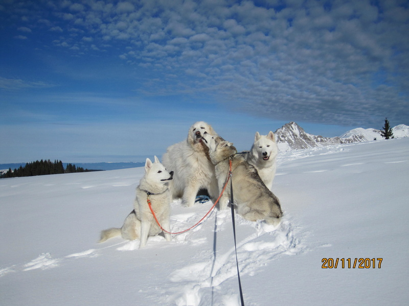 Saskia, Jiro, et leurs copains - Page 3 1115