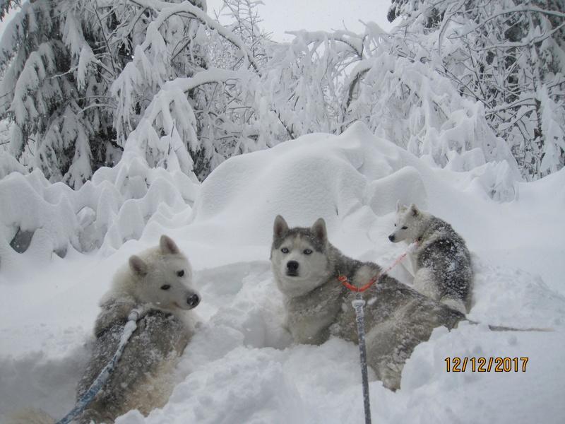 Saskia, Jiro, et leurs copains - Page 5 1122