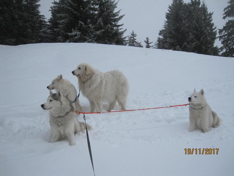 Saskia, Jiro, et leurs copains - Page 3 118