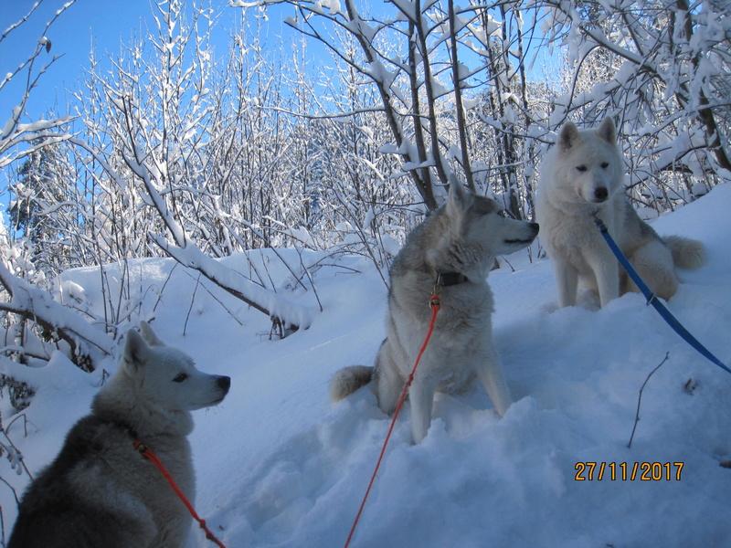 Saskia, Jiro, et leurs copains - Page 4 122