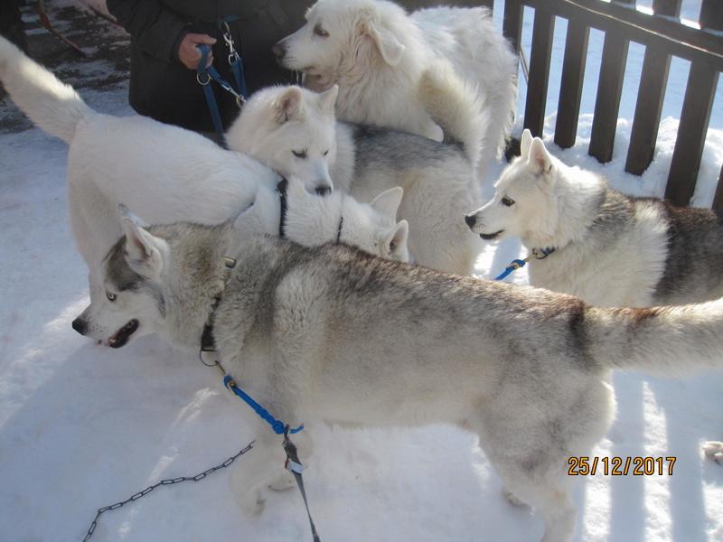 Saskia, Jiro, et leurs copains - Page 2 1230