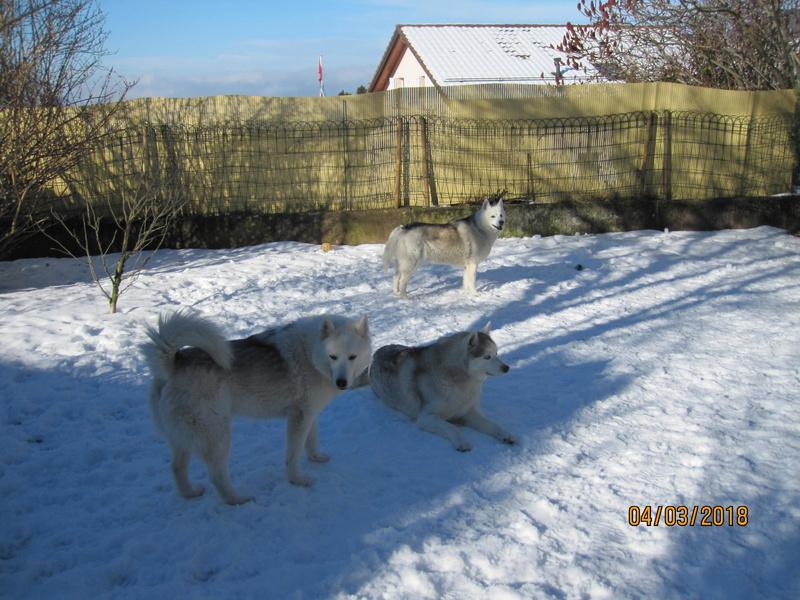 Saskia, Jiro, et leurs copains - Page 4 1246