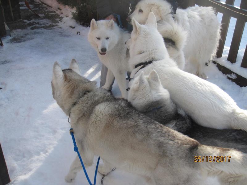 Saskia, Jiro, et leurs copains - Page 2 1324