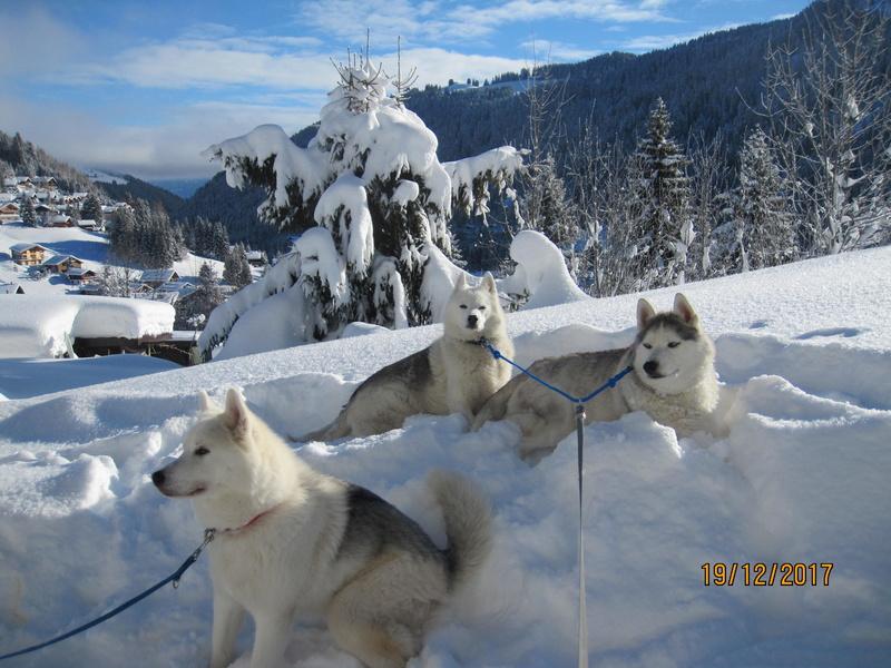 Saskia, Jiro, et leurs copains - Page 2 140