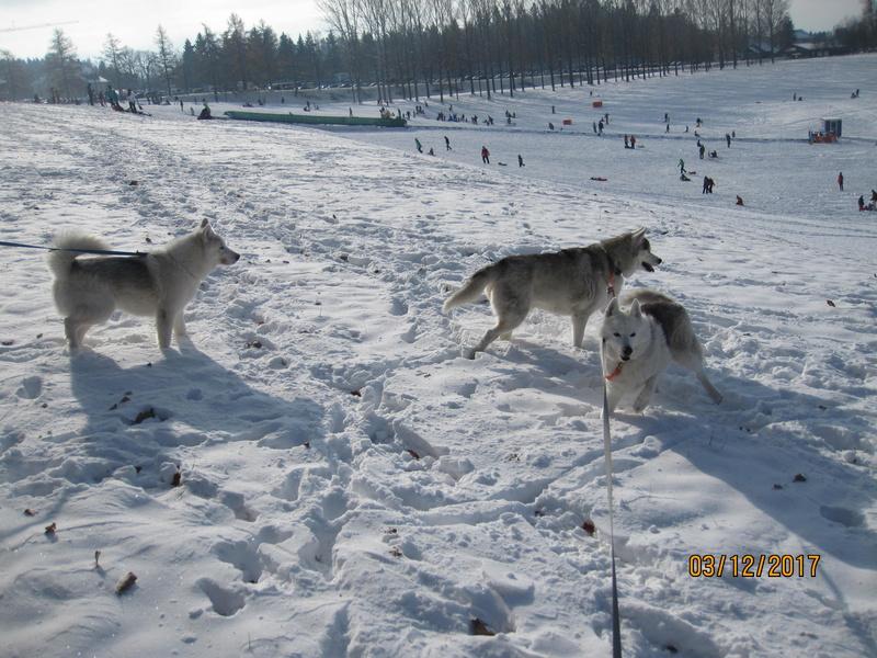 Saskia, Jiro, et leurs copains - Page 4 1415
