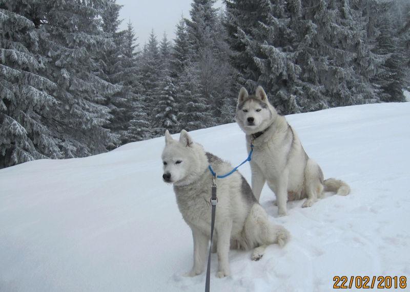 Saskia, Jiro, et leurs copains - Page 3 172