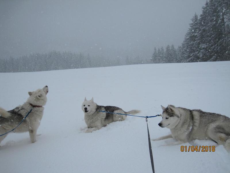 Saskia, Jiro, et leurs copains - Page 16 188