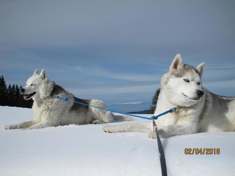 Saskia, Jiro, et leurs copains - Page 16 189